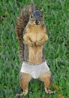 squirrelsunderwear